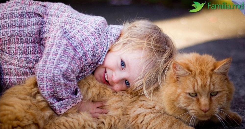 Clasamentul Celor Mai Potrivite Rase De Pisici Pentru O Familie Cu