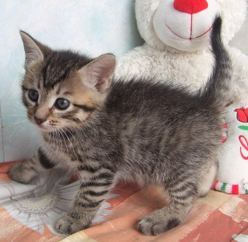 котенка фото беспородного куплю